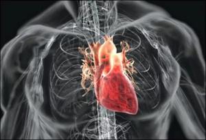 Поможет не только снизить давление, но и в ряде проблем с сердцем