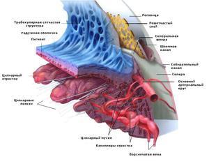 Строение и функции роговицы глаза человека