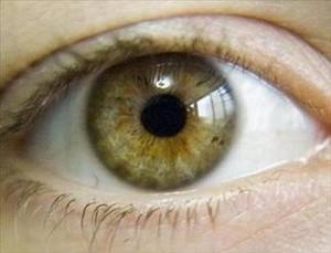 Цвета глаз разновидности