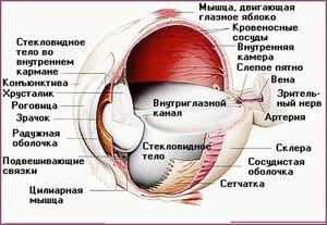 Защитная система глаза